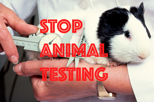 As people question why big brands still conduct animal testing, the shift to slow and ethical consumption is growing.