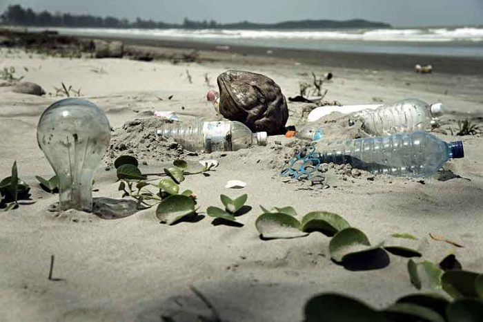 These plastic bottles will take 1 000 years to break down into microplastics, which are extremely harmful to marine life.